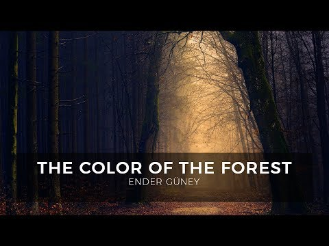 The Color Of The Forest - Ender Güney