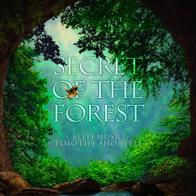 Nuevo single de Timothy Shortell: Secret of the Forest